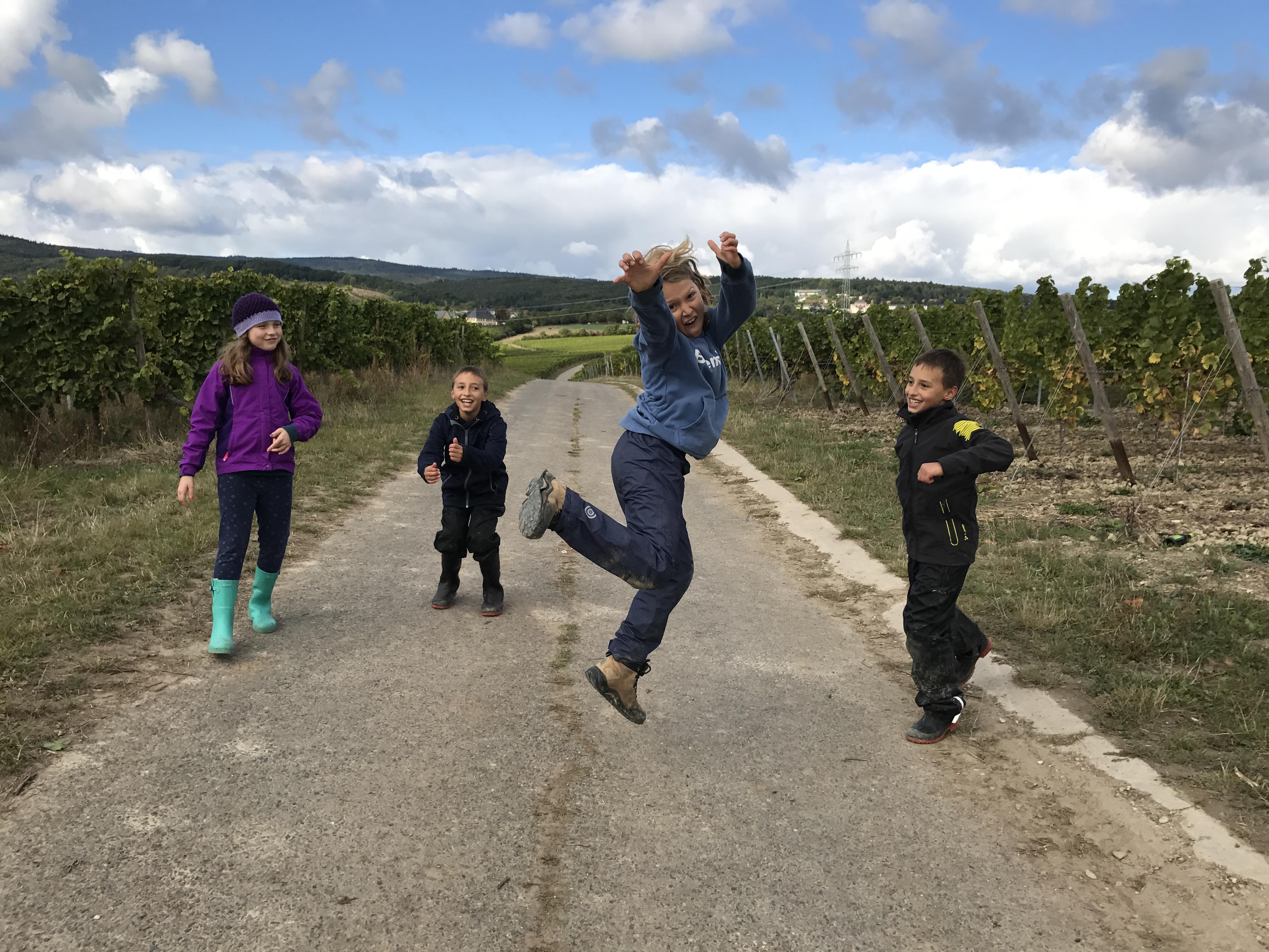 Spaß bei der Weinlese im Rheingau