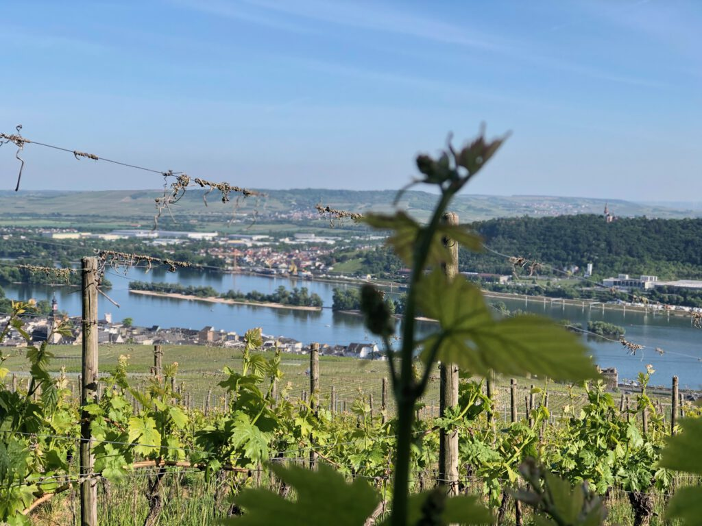 Rheingau - Weingut werk2 - Ansicht auf Rüdesheimer Aue