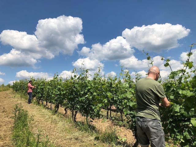 Weingut werk2 - Hattenheim