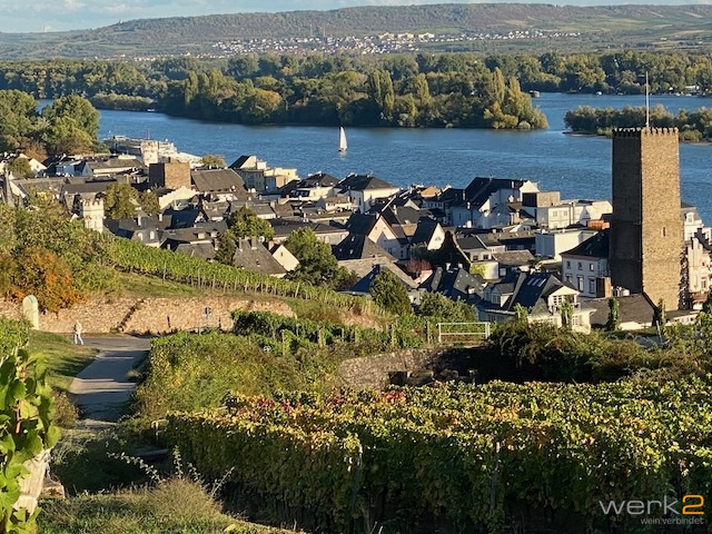 Blick auf Rüdesheim und den Rhein von den Weinbergen.